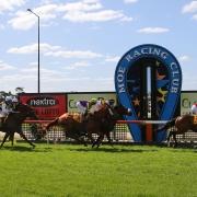 Horses racing on Moe racing club turf