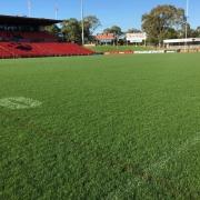 Turf at Credit Union Australia stadium